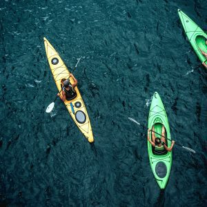chetco river wildlife viewing kayak & sup tour