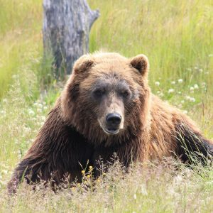 alaska wildlife conservation center and turnagain arm tour